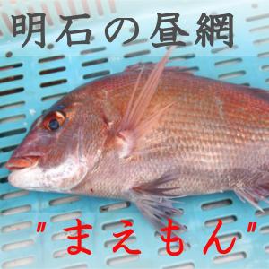 明石の魚たちのイメージ